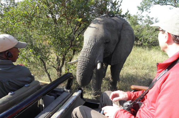 Elephant sighting on a game drive in Thornybush Private Game Reserve.
