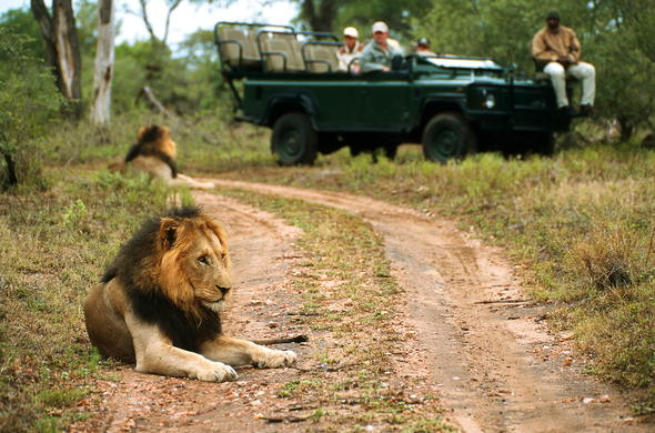 Game drives are offered in Thornybush Game Reserve.