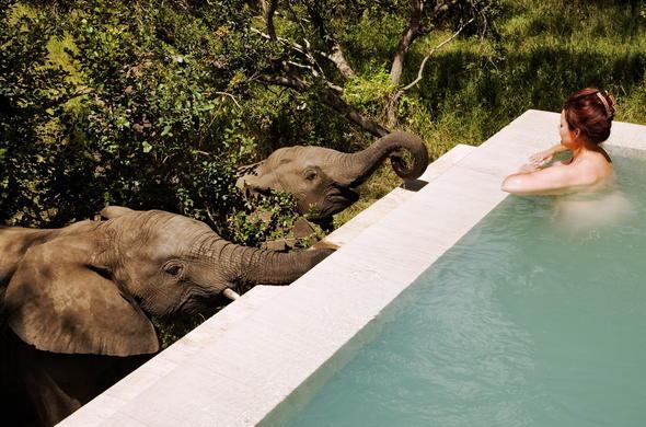 Royal Malewane Luxury Safari Lodge ***** Thornybush Game Reserve, South  Africa