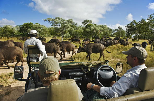 Enjoy magnificent wildlife encounters.