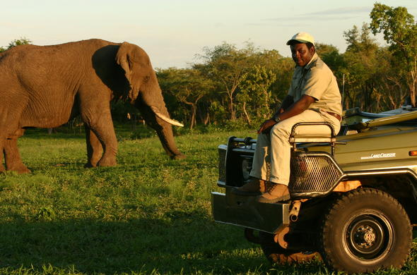 Game ranger on a bush cruise to see elephant in Thornybush Game Reserve.