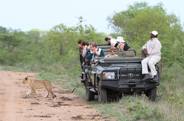 Guests enjoying a lion sighting on a Thornybush game drive.